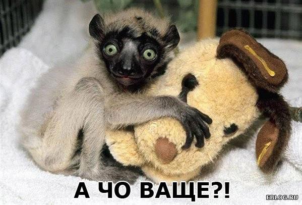 Позитив в понедельник :)))