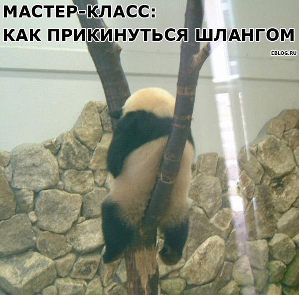 Позитивные картинки :))