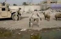 Овца шугает американских солдат :))) (видео)