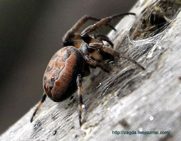 Глобализация и новые технологии у пауков :)