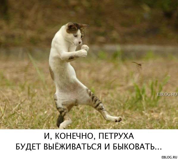 Веселые картинки на еблоге :): www.eblog.ru/index.php?newsid=1935