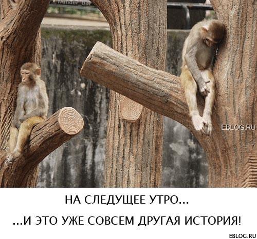 http://media.eblog.ru/092007/07/funpic18.jpg