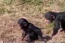 Очень плохая обезьянка