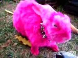 Готичный кролег