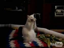Кошаг молится о баночке висказа :)))