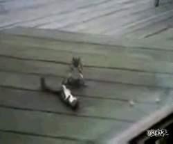 Белки отрабатывают тактический прием
