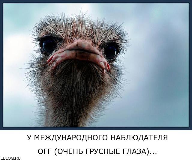 Аццки-доходчивый, АБАССАЧНЫЙ креатив о выборах в 43 картинках. Смотреть и показывать друзьям!!!