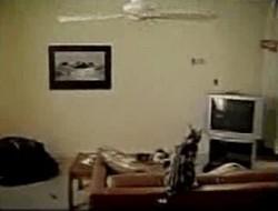 Летающий котег ^_^