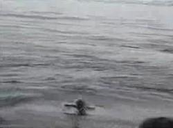 Находчивый пингвинчек ^_^