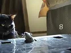 Как расшатать коту нервы? Руководство.