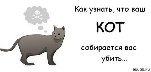 Ваш кот хочет вас убить. Улики: 10 картинок.