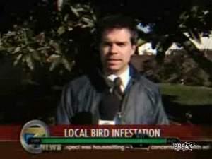 Умные птицы редко ошибаются. Видео жжот!