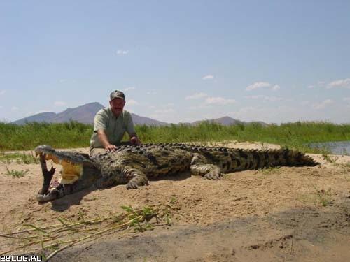 Как поссорились крокодил Гена и Чебурашка. Жесть!