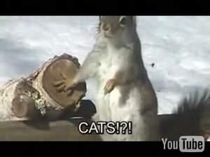 Видео порвало в клочья: 300 кошко- спартанцев... :)))
