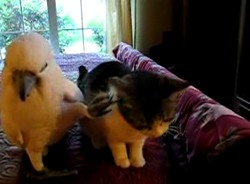 Попугай чешет коту ушко ^___^