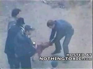 Бультерьер напал на 2 человек, видео.