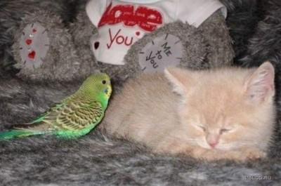 Попугай пришёл к коту...