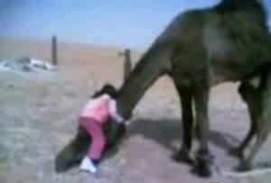 Как в 4 года залезть на верблюда?