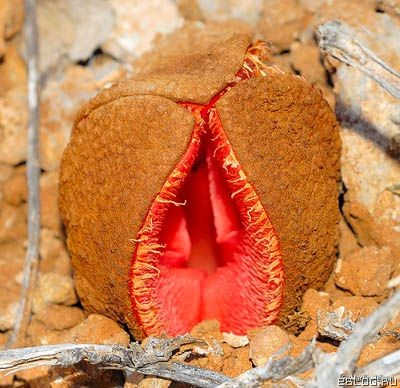 8 самых странных растений в мире. 18 фото.