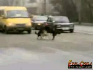 Собаки устроили оргию посреди перекрестка