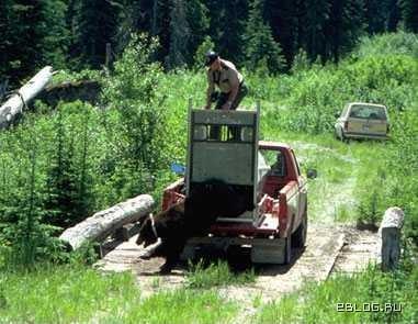 Медвед: никто не забыт, ничто не забыто. 8 фото.