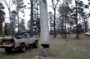 Как надо валить деревья