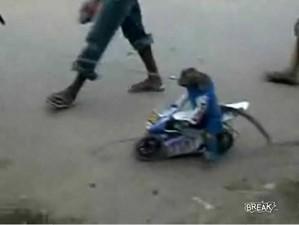 Мартышка на мотоцикле
