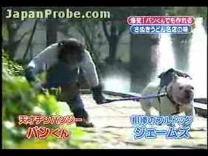 В Японии жгут даже обезьяны :)))