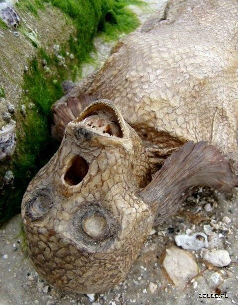 Сушеная русалка, 5 фото