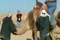 Не грузовой верблюд обиделсо ^_^