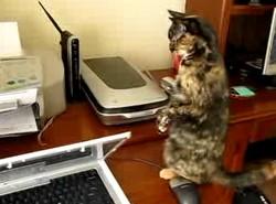 Специально обученный кот