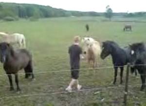"""Пони сказала """"нет"""" наезднику"""