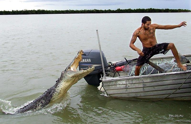 видео с дикими животными на рыбалке